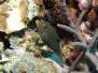Komodo 2006-10