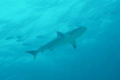 Sharkschool 2004-04